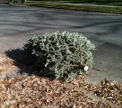 When Should You Take Down Christmas Tree.When Do You Take Down Your Christmas Tree