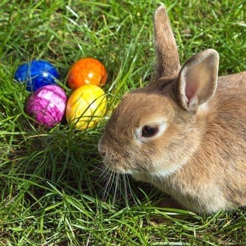 where did easter bunny originate