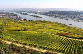 Ruedesheim vineyards