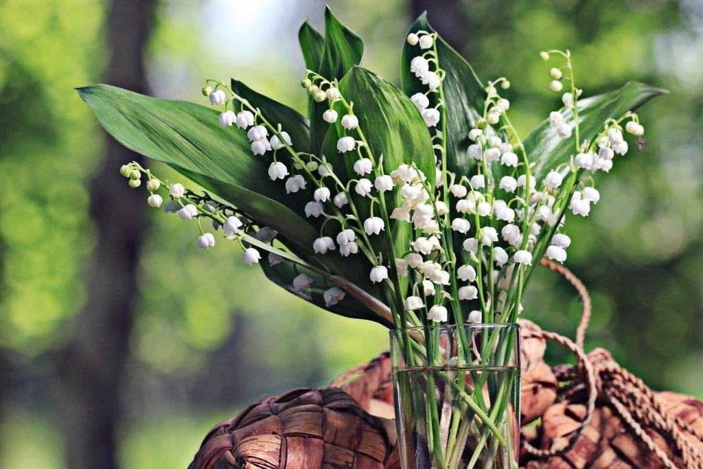Remove term: Symbolism Lily of the Valley Symbolism Lily of the Valley