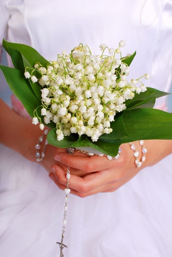 symbolism lily of the valley