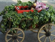 cart-436550_1920