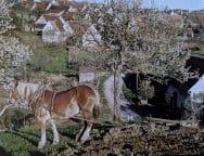 german village life