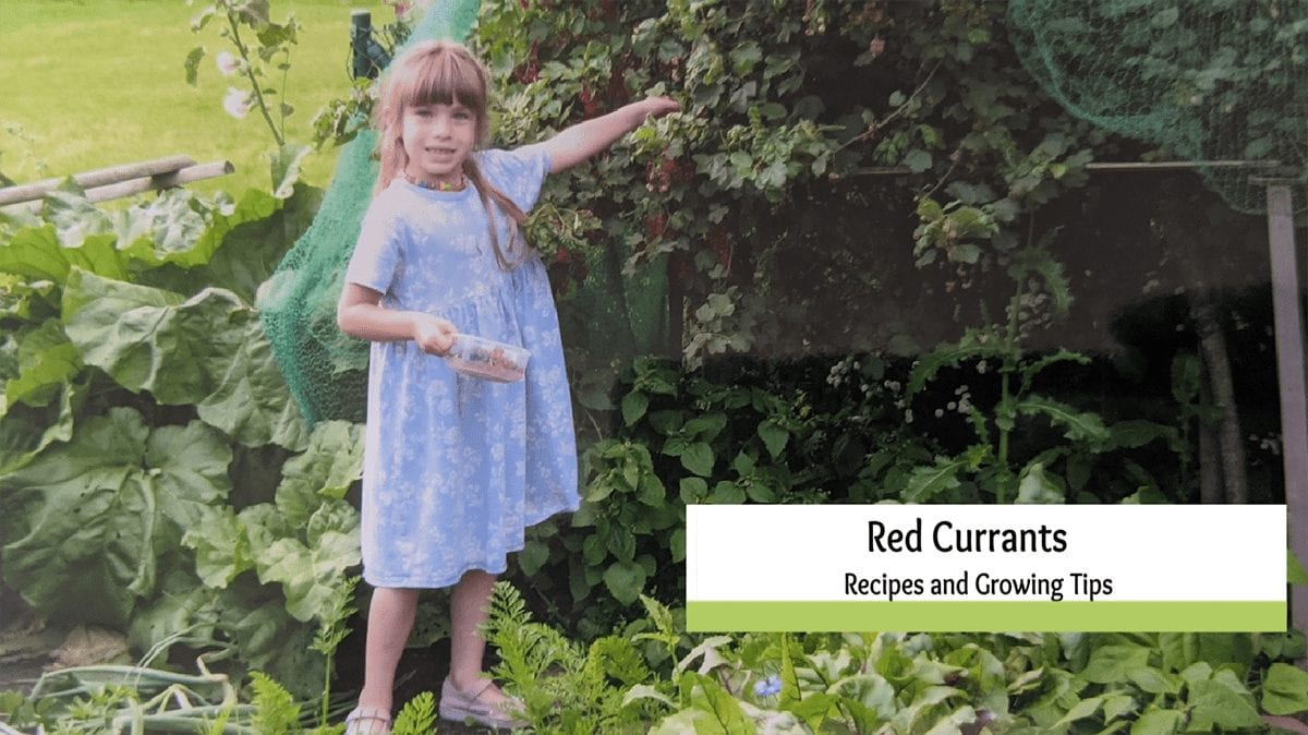 What to do with Red Currants! Recipes and Growing Tips