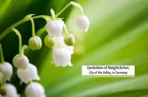 symbolism of Maiglöckchen cover