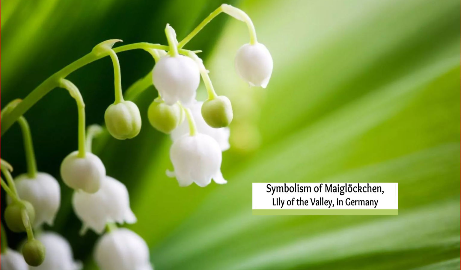 Symbolism of Maiglöckchen, Lily of the Valley in German